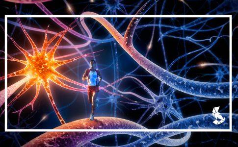 Correr faz cérebro criar novos neurônios