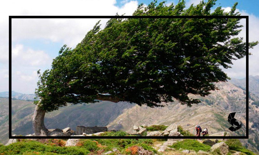 as árvores mais fortes